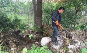 南京六合区:继续组织搜捕外逃眼镜蛇,幼蛇毒性不大过不了冬