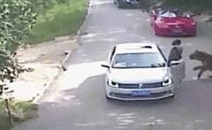 """北京""""老虎伤人事件""""家属首度回应:下车因晕车,非吵架暴怒"""