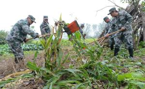 南京六合眼镜蛇事件库存幼蛇全部移送至泰州一家庭农场寄养