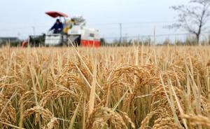 变暖幅度明显高于全球,中国每年因气象灾害粮食减产千亿斤