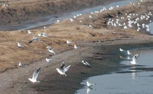 唐山近期查处非法猎捕野生鸟类案件9起,收缴候鸟4.8万只