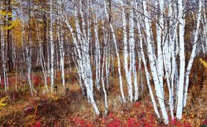 图解|近25年,中国森林增长世界第一,全球森林面积仍锐减