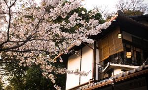 新井一二三专栏:当日本人遇到家庭纠纷时,他们会怎么办