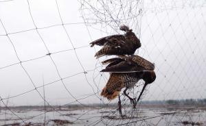 拆网行动|保定森林公安:接举报后毁鸟网九百米,将查卖网者