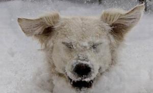 冰天雪地里满地打滚的动物王国,治愈你被寒潮笼罩的身心