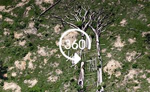 全景视频|亚马孙雨林盗伐严重,成片秃瘠触目惊心