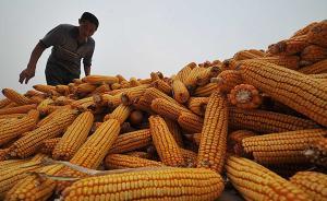 """农产品价改""""硬仗""""集中在玉米和大豆,临储政策将全面退出"""