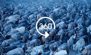 全景视频|寻找北极冻土带驯鹿牧民——以鹿为生的涅涅茨人
