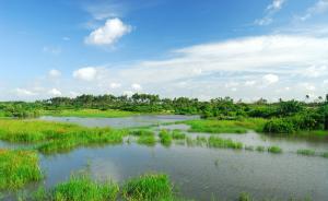 国家海洋局:用4年修复恢复滨海湿地总面积至少8500公顷