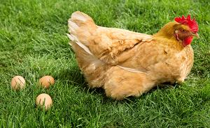 专家谈人感染H7N9防控:别与活禽接触,禽蛋必须煮熟