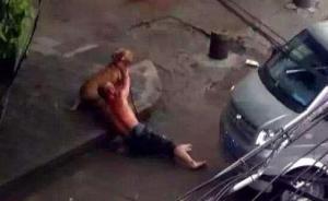 湖北宜昌一发情比特犬当街撕咬领养主人,被警方3枪击毙