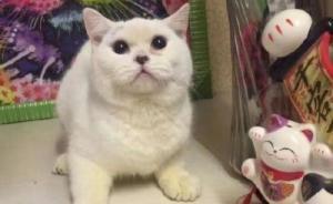 丽江女子将宠物猫剥皮录视频道歉,警方:虐猫还不属公安管辖