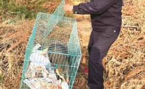 浙江一农民为搏点击量直播猎捕猪獾,正展示猎物森林警察赶到