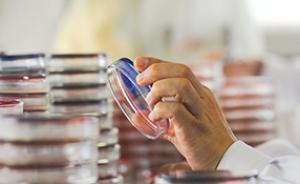 """美国老妪感染""""超级细菌""""身亡:对26种抗生素全产生耐药性"""