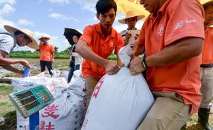单造亩产832.1公斤!袁隆平亲自选育超级稻破世界纪录