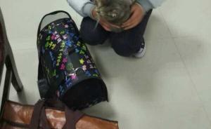 杭州一女大学生肚子藏猫扮孕妇去坐火车,过安检时猫叫了……