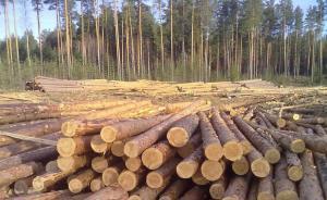 内蒙古去年进口俄罗斯木材1331万立方米,超西湖蓄水量