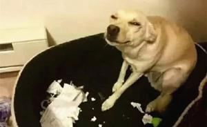 """澎湃联播 """"报告老师,我的寒假作业被狗吃了"""""""
