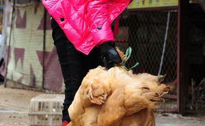 云南确诊第二例输入性H7N9病例:已死亡,两患者系母女