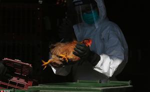 广西卫计委通报今年第二起人感染禽流感病例,均抢救无效死亡