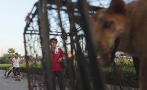 """玉林""""狗肉节""""冲突降温:爱狗者转向教育当地下一代不要吃"""