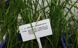 农业部:通过科学安全评价和政府批准的转基因农产品是安全的