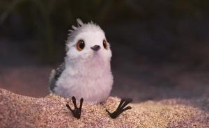 地图湃 | 候鸟的迁徙①:身轻如鹬,壮志凌云