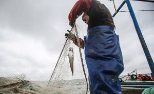 禁捕规划下的刀鱼季(上)有时一网下去啥都没,经纪人想转型
