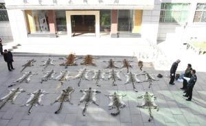 西藏查获一重大濒危动物制品案件,缴获20张雪豹皮