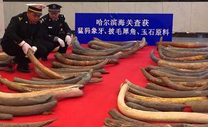 黑龙江警方查获一起猛犸象牙走私案,缴获象牙107根