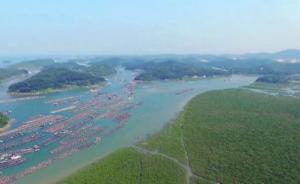 广西三市根据中央督察组要求,停建占用红树林保护区项目