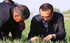 """""""农科专家""""李克强种地有多专业:嚼生米粒、弯腰看苗情"""