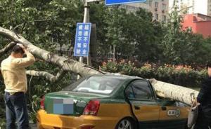 北京迎大风天气:出租车被大树砸瘪,路人被坠物砸中头部