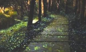 海口叫停萤火虫文化节,专家:盲目放生或影响当地生态环境