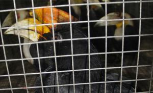 广西一男子网售水獭、蟒蛇等国家重点保护野生动物,被判5年