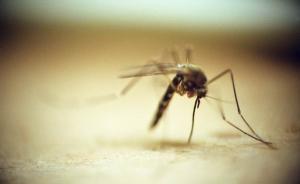 准妈妈更易招蚊子,防叮咬该怎么办