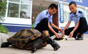云南男子朋友圈发视频称要杀凹甲陆龟,警方查扣、其父被取保