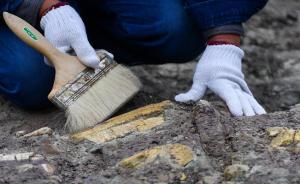 近日,中国科学院与延吉古生物化石保护研究中心联手启动对吉林延吉龙山恐龙化石群的系统发掘工作。经中国科学院等部门相关专家现场考察,初步认定恐龙化石的地质年代属于白垩纪。根据已发掘恐龙化石初判,恐龙种类有5或6种。5月26日,科考人员在发掘现场进行作业。本文图片均为 新华社 图