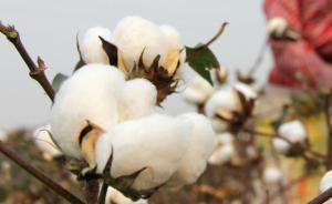 """棉花""""甲基化基因图谱""""首次绘成,不改变基因就能培育新品种"""