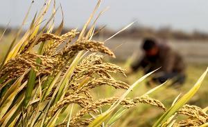 200个产粮大县今明两年将进行农业大灾保险试点