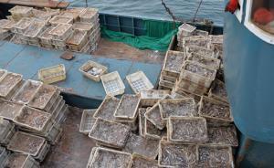 江苏破获10年来最大海洋偷捕案:休渔期非法捕捞14万公斤