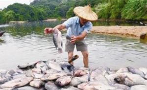 福建漳浦一养殖户4万斤鱼死亡,环保局已对上游污水取样调查