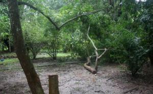 3男子盗窃中科院植物园黄花梨树,各获刑八年罚金10万
