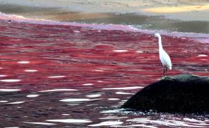 福建官方:泉州、厦门海域赤潮持续,漳州海域赤潮消亡