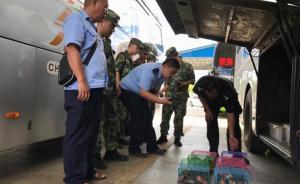 云南一客车偷运逾百只蜜袋鼯被查,另类宠物或致生物入侵