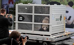 """早安,全世界都在看↑中国大熊猫""""梦梦""""和""""娇庆""""顺利抵德"""