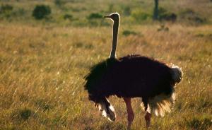 """首批""""人工繁育国家重点保护陆生野生动物""""发布,可用于买卖"""