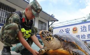 广西边防官兵查获涉嫌非法运输玳瑁标本2只及鲨鱼皮11袋