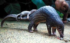 中国自然观察2016:濒危野生动物名单越来越长