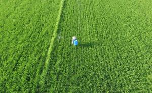 """河南新乡镉麦事件启示:为""""过劳田地""""构建土壤环境标准体系"""